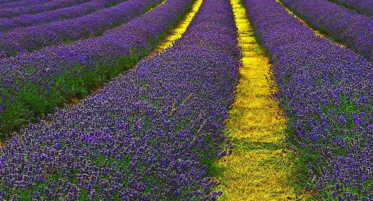 Flowers that can cure childhood leukemia