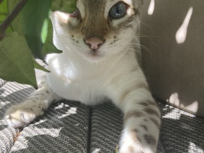Cat Sitter Wanted